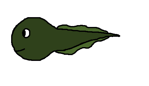 Cartoon Tadpole